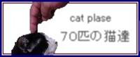 70catsbana2