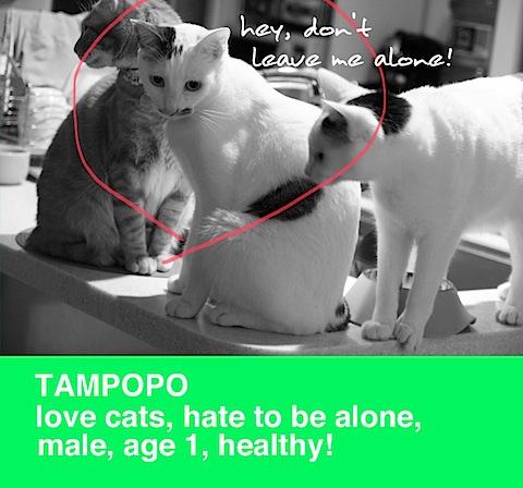 tampopo_green.jpg