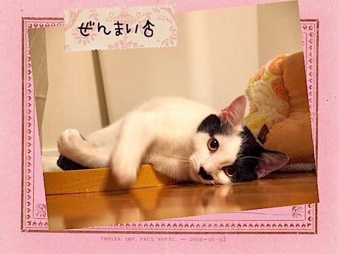 zenmai_name.jpg